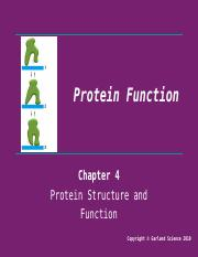 Lecture 6 - Protein Function.pptx