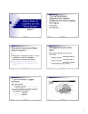 Session 2_NeuralBasis_Visual_system_handout