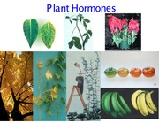 Wk 7 - plant_hormones1_final_temp_posted