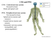 Chapter 47 The Nervous System