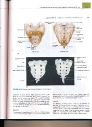 saladin anatomy and physiology pdf chapter 29
