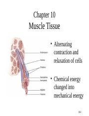 MUSCLE REVISED