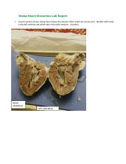Sheep Heart Dissection Lab ReportName.docx