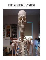 Ch 07 The Skeletal System.pptx