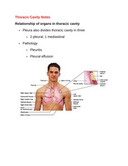 Thoracic Cavity Notes