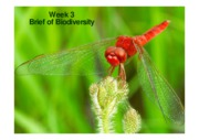 Week 3-1 Brief of Biodiversity