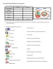 cell organelles.pdf - CELL STRUCTURE AND PROCESSES Practice ...