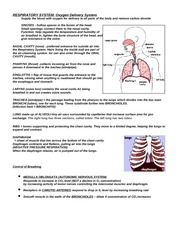 Chapter 42 (Respiration) Notes