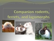 Ch._7_rodents_ferrets_and_lagomorphs_part_1 copy