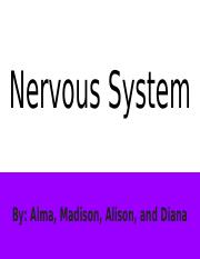 Human Body Systems- Nervous System