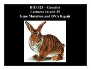 Lesson 14-15 Gene Mutation and DNA Repair.ppt
