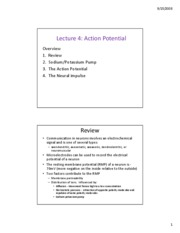 lecture 4 action potential