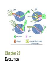 25 Evolution slides.pdf