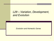 L29 -  Evolution and Homeotic Genes