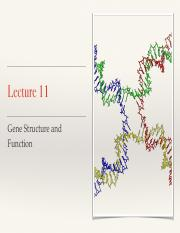 Lecture 11 Gene Structure and Function