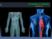 Lab 9 - Circulation in Animals(1)