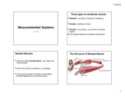 Lecture09-10 Musculoskeletal Systems CH 43 (4 slides)
