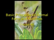 40-Basic Principles of Animal Form and Function