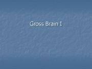 2010_Gross_Brain_I