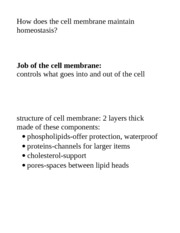 structure of cell membrane