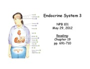 lecture39_Endocrine3_2012_POSTED