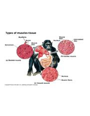 lecture-1-animal-cell-types-and-tissues-54-638.jpg