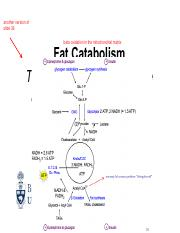 Lecture 14 Monday, June 13 (Fat Catabolism).pdf