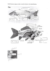 Fish Atatomy Worksheet