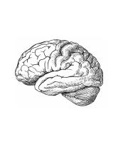 brain_labeling_pictures.doc