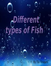 The Different types of Fish Presentation