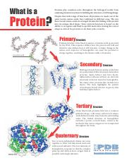 what_is_a_protein