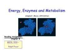 Lecture #8 - Energy, Enzymes and Metabolism
