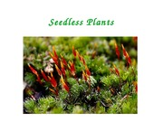 Lecture 12 - Seedless plants