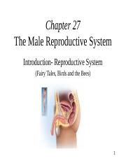 chapt27 v0810 Male Reproduction (1).PPT