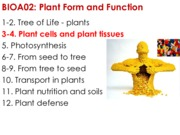 03 Plant cells and plant tissues I sv