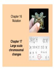 Chapter17 3PM class Dr. Stone.pdf