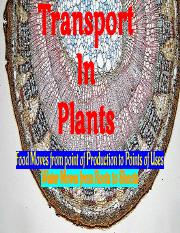 12P1B Bio L3_T2 - Transport in Plants.pdf