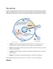 The cell cycle.docx
