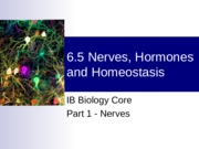 01_Nerves_Hormones_and_Homeostasis_part_1_nerves