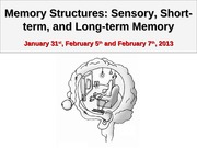 Psych 207- Ch5_MemoryStructures