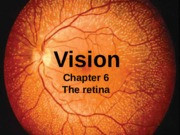 Part 2 the retina without narration