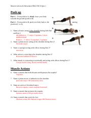 Muscle Actions & Movement PRACTICE QUIZ 1 Key.docx