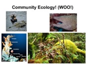 Community Ecology LEC 04.pdf