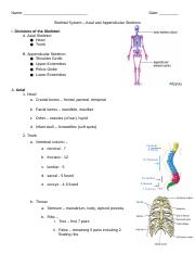 Copy of Copy of Skeletal System - Axial and Appendicular Outline