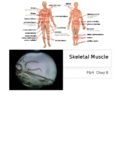 4. Chap 8 - Muscle Structure & Function