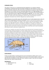 Pill Bug Lab (11)