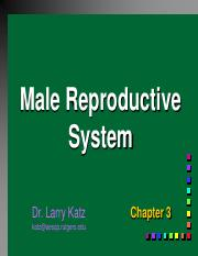 Lecture 4 Male Reproductive System.pdf