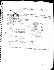 Circulatory, Respiratory, Nervous systems notes