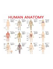 parts-of-the-human-anatomy-human-anatomy-parts-and-functions-hu-on-the-body-inner-parts-of-awesome.p