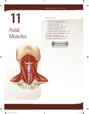11. Axial Muscles